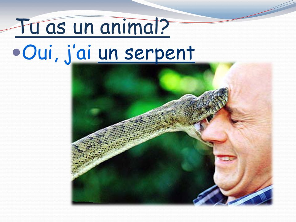 Tu as un animal Oui, jai un poisson