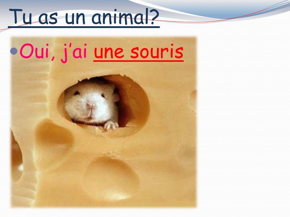 Tu as un animal? Oui, jai une araignee
