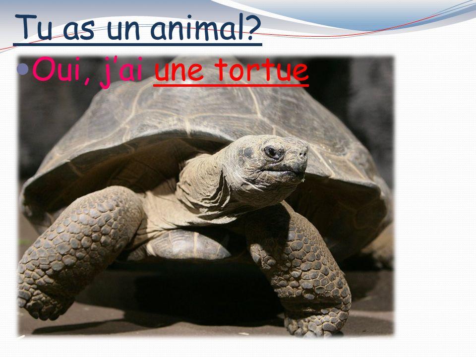 Tu as un animal? Oui, jai une souris