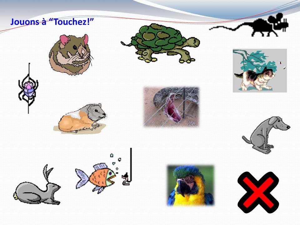 Une tortue Une souris Une araignée Un chien Un hamster Un chat Un lapin Un cochon dinde Un oiseau Un poisson Un serpent Les animaux MasculinFéminin