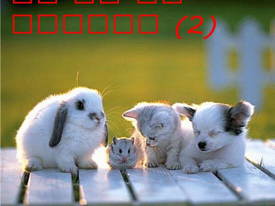 A deux! Cest quel animal? Cest…. 1 23 4 5 6 7 8 910 11
