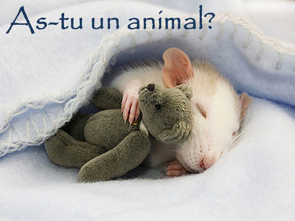Tu as un animal? Oui, jai un hamster
