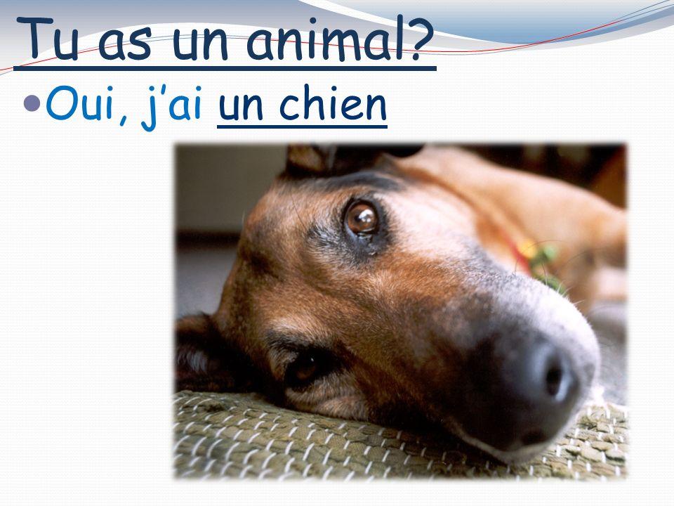 Tu as un animal? Oui, jai un chien