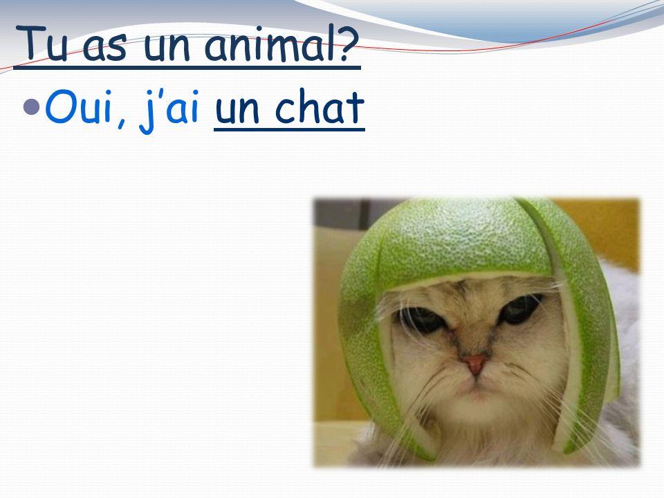 Tu as un animal? Oui, jai un chat
