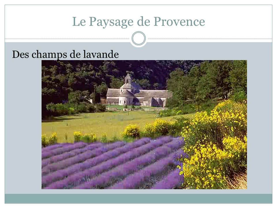 Le Paysage de Provence Des champs de lavande