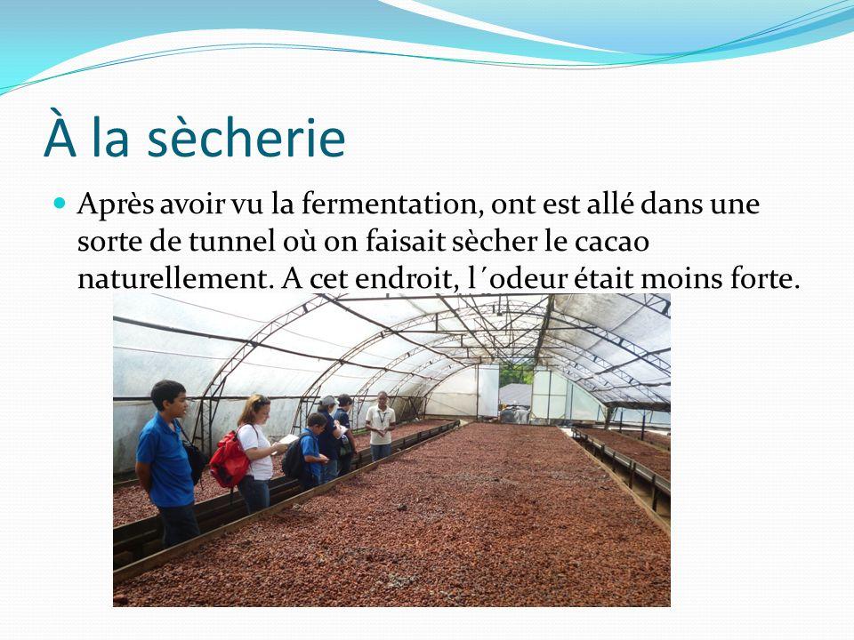 À la sècherie Après avoir vu la fermentation, ont est allé dans une sorte de tunnel où on faisait sècher le cacao naturellement.