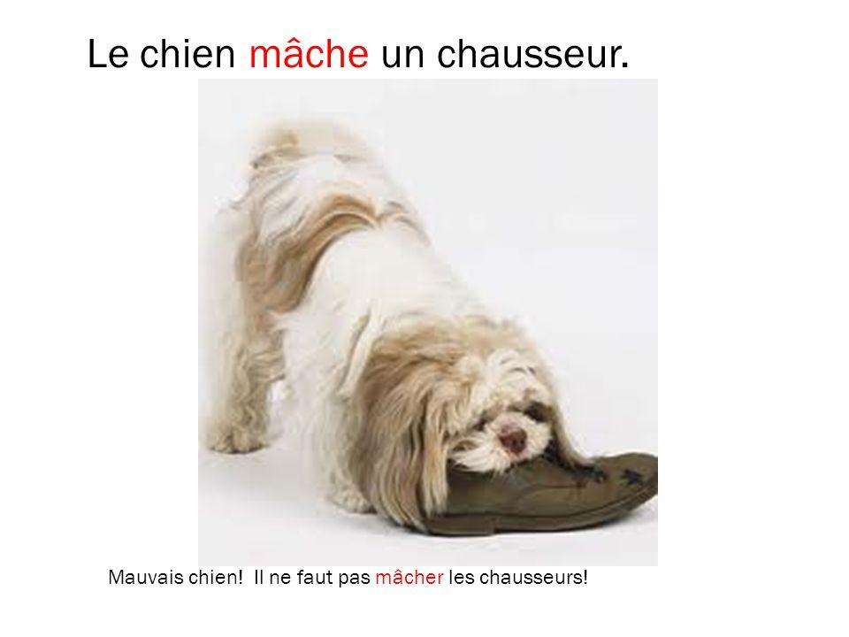 Le chien mâche un chausseur. Mauvais chien! Il ne faut pas mâcher les chausseurs!