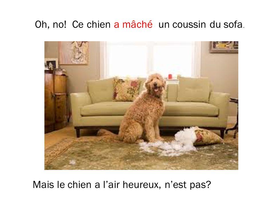 Oh, no! Ce chien a mâché un coussin du sofa. Mais le chien a lair heureux, nest pas?