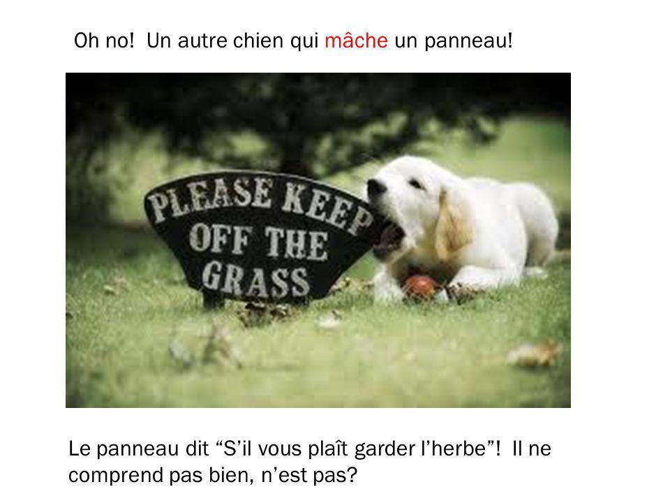 Oh no! Un autre chien qui mâche un panneau! Le panneau dit Sil vous plaît garder lherbe! Il ne comprend pas bien, nest pas?
