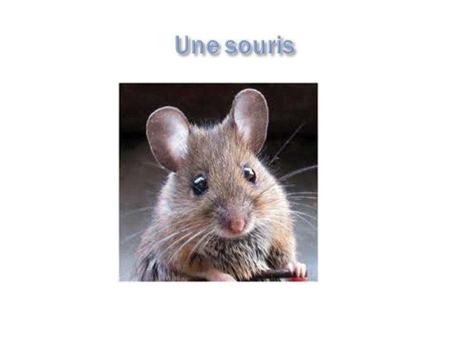 Les deux souris parlent ensemble. De quoi parlent-ils?