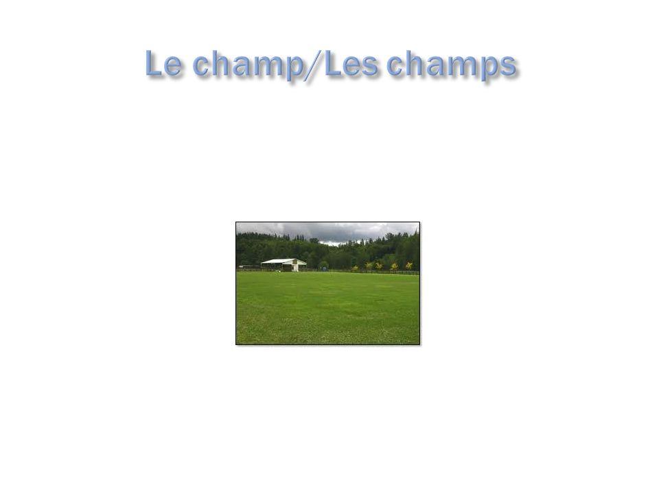il/elle mâche = he/she chews, is chewing Il/elle parle = h/s speaks, is speaking Chez lui/chez elle = his/her house or place