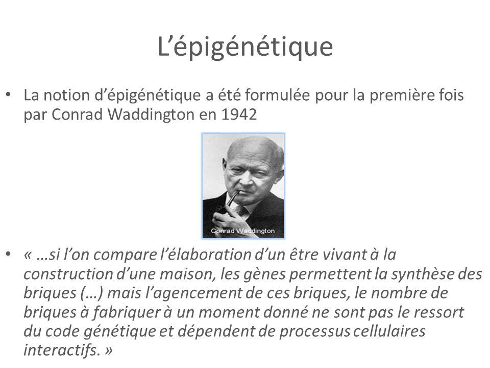 Lépigénétique La notion dépigénétique a été formulée pour la première fois par Conrad Waddington en 1942 « …si lon compare lélaboration dun être vivan