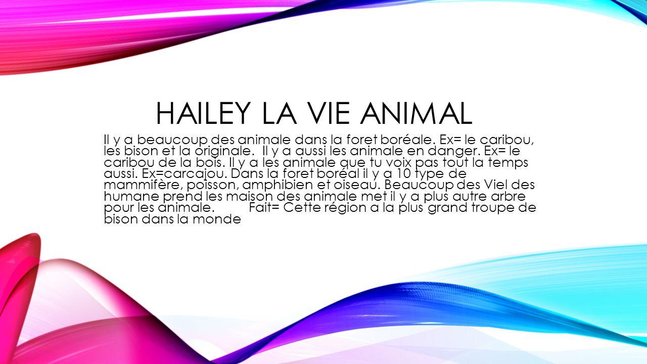 HAILEY LA VIE ANIMAL Il y a beaucoup des animale dans la foret boréale. Ex= le caribou, les bison et la originale. Il y a aussi les animale en danger.