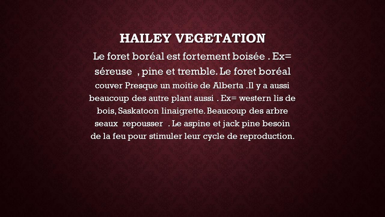 HAILEY VEGETATION Le foret boréal est fortement boisée. Ex= séreuse, pine et tremble. Le foret boréal couver Presque un moitie de Alberta.Il y a aussi