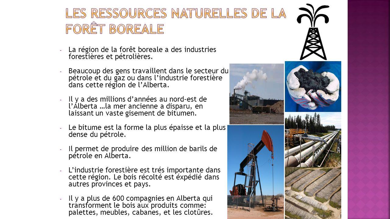 - La région de la forêt boreale a des industries forestières et pétrolières. - Beaucoup des gens travaillent dans le secteur du pétrole et du gaz ou d