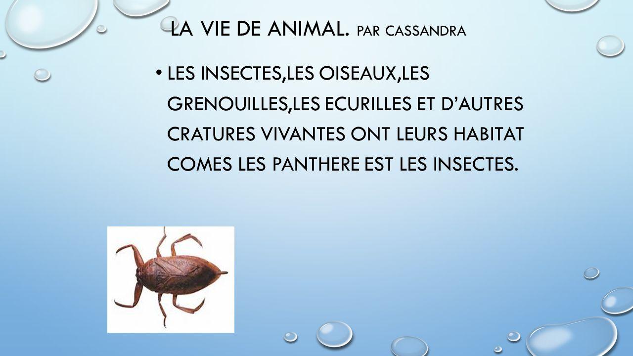 LA VIE DE ANIMAL. PAR CASSANDRA LES INSECTES,LES OISEAUX,LES GRENOUILLES,LES ECURILLES ET DAUTRES CRATURES VIVANTES ONT LEURS HABITAT COMES LES PANTHE