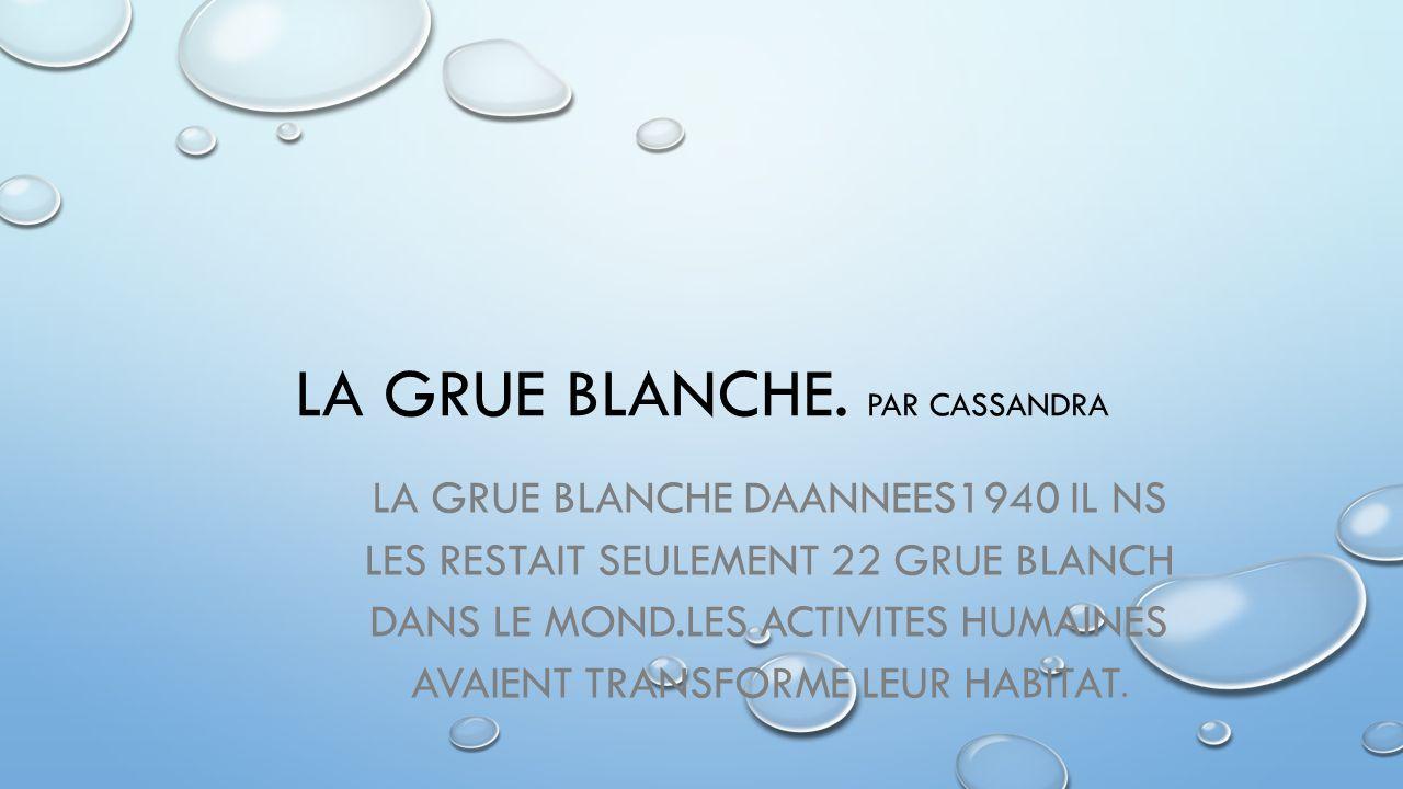 LA GRUE BLANCHE. PAR CASSANDRA LA GRUE BLANCHE DAANNEES1940 IL NS LES RESTAIT SEULEMENT 22 GRUE BLANCH DANS LE MOND.LES ACTIVITES HUMAINES AVAIENT TRA