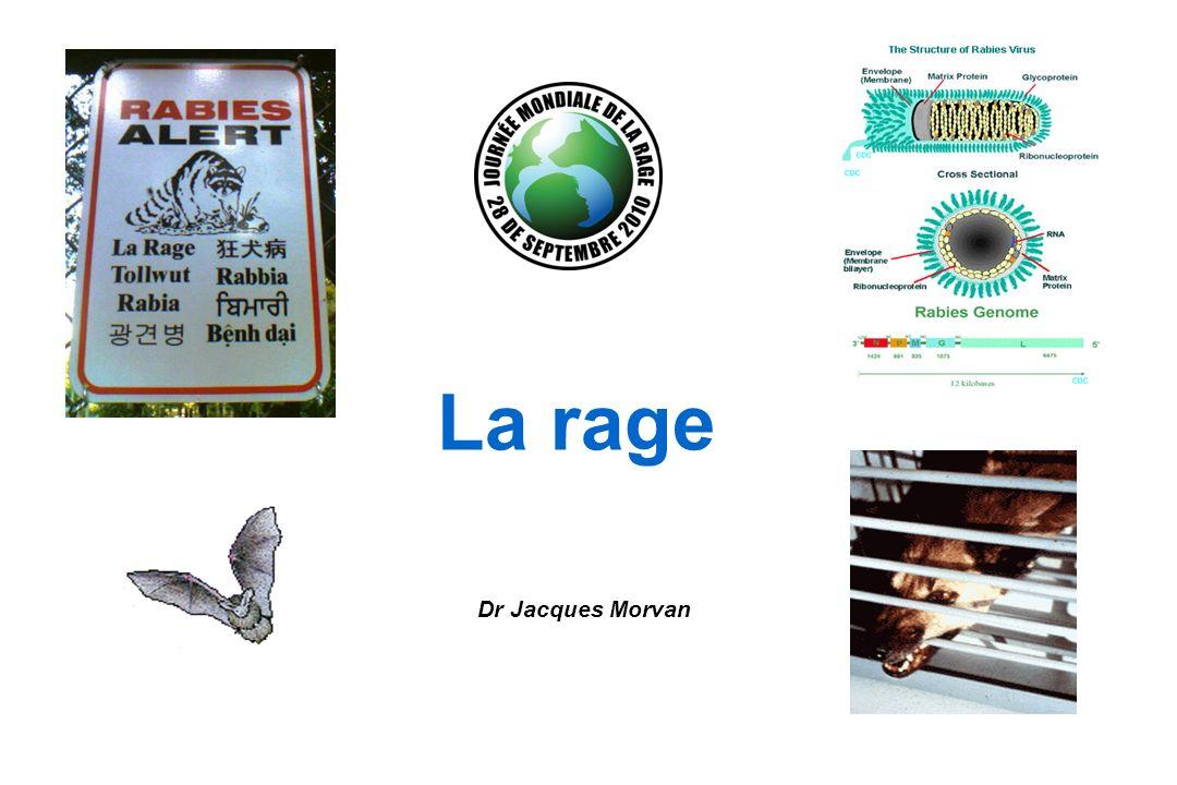 La rage urbaine ou « rage des rues » Les chiens constituent le réservoir et le vecteur principal du virus dans le monde.