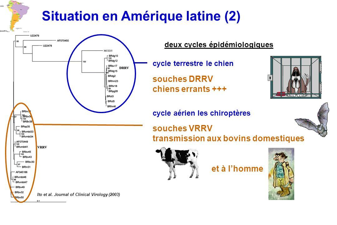 Ito et al. Journal of Clinical Virology (2003) Situation en Amérique latine (2) deux cycles épidémiologiques cycle aérien les chiroptères souches VRRV