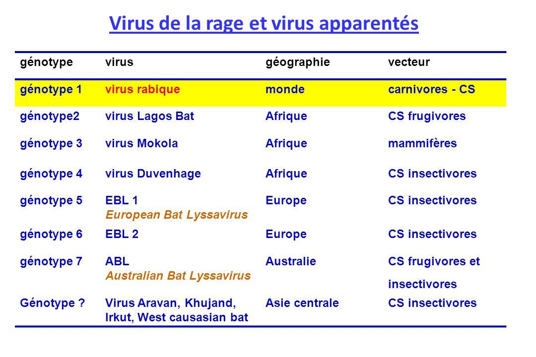 Virus de la rage et virus apparentés génotypevirusgéographievecteur génotype 1virus rabiquemondecarnivores - CS génotype2virus Lagos BatAfriqueCS frug