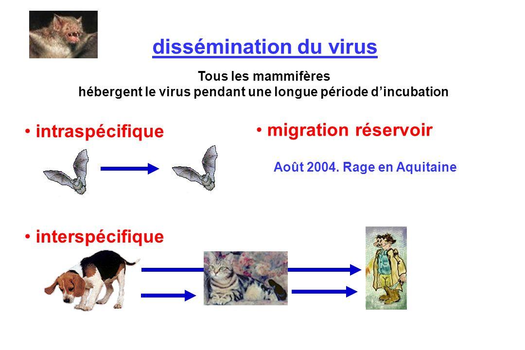 Tous les mammifères hébergent le virus pendant une longue période dincubation intraspécifique interspécifique dissémination du virus migration réservo