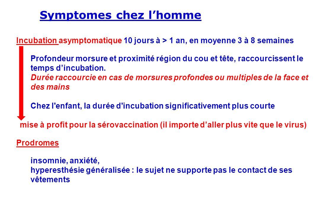 Symptomes chez lhomme Incubation asymptomatique 10 jours à > 1 an, en moyenne 3 à 8 semaines Profondeur morsure et proximité région du cou et tête, ra