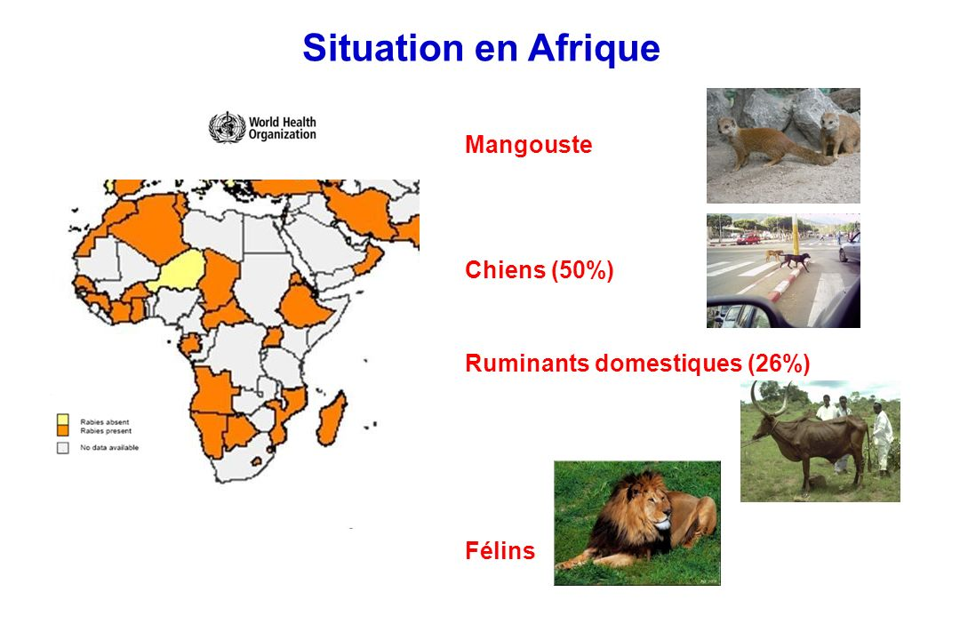 Situation en Amérique du Nord skuns raton-laveur chauves-souris ruminants