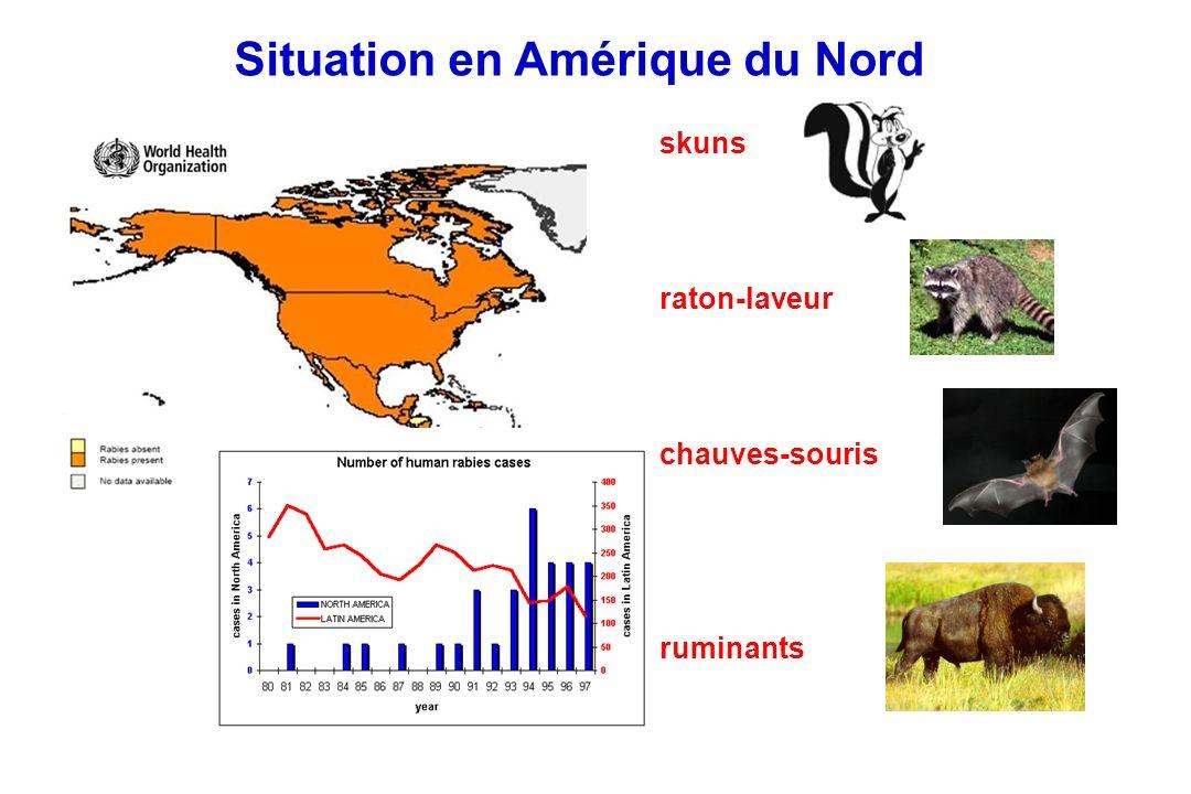 Ecologie de la rage animale Les virus de la rage se perpétuent dans deux grands cycles naturels a.