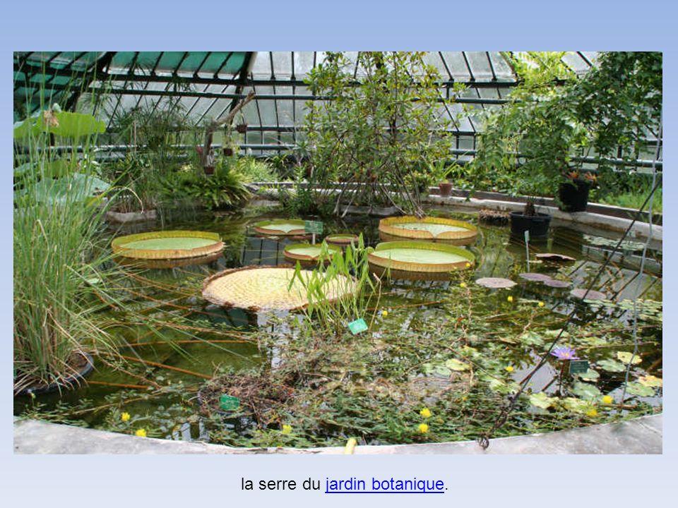 la serre du jardin botanique.jardin botanique