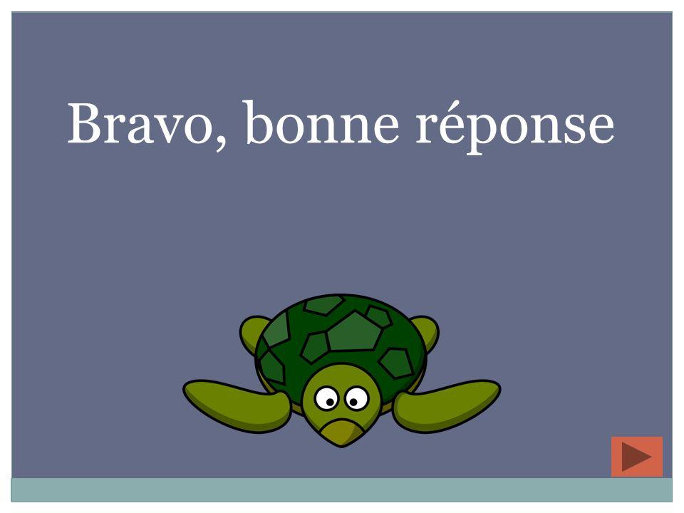 La tortue est son amie.