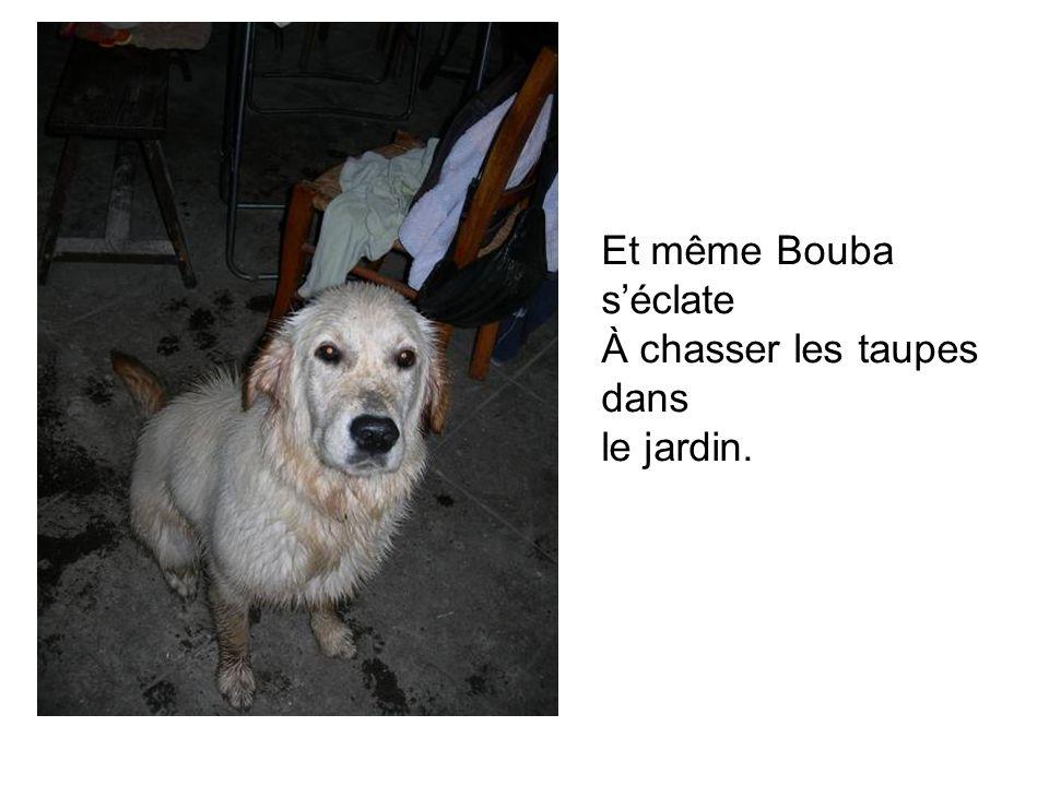 Et même Bouba séclate À chasser les taupes dans le jardin.