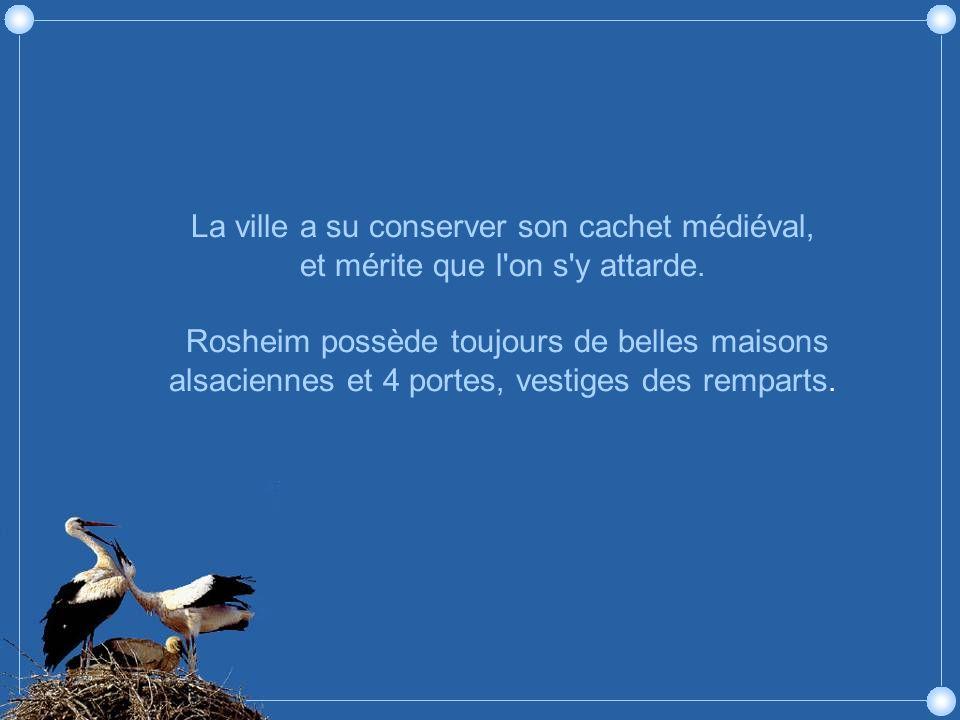 Rosheim, le vignoble