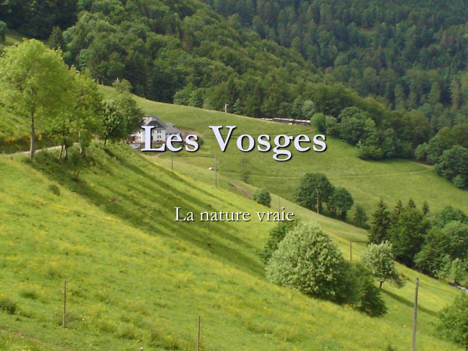 Les Vosges La nature vraie