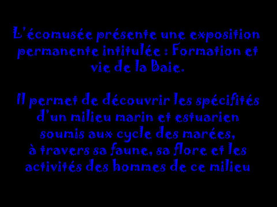 Lécomusée présente une exposition permanente intitulée : Formation et vie de la Baie.