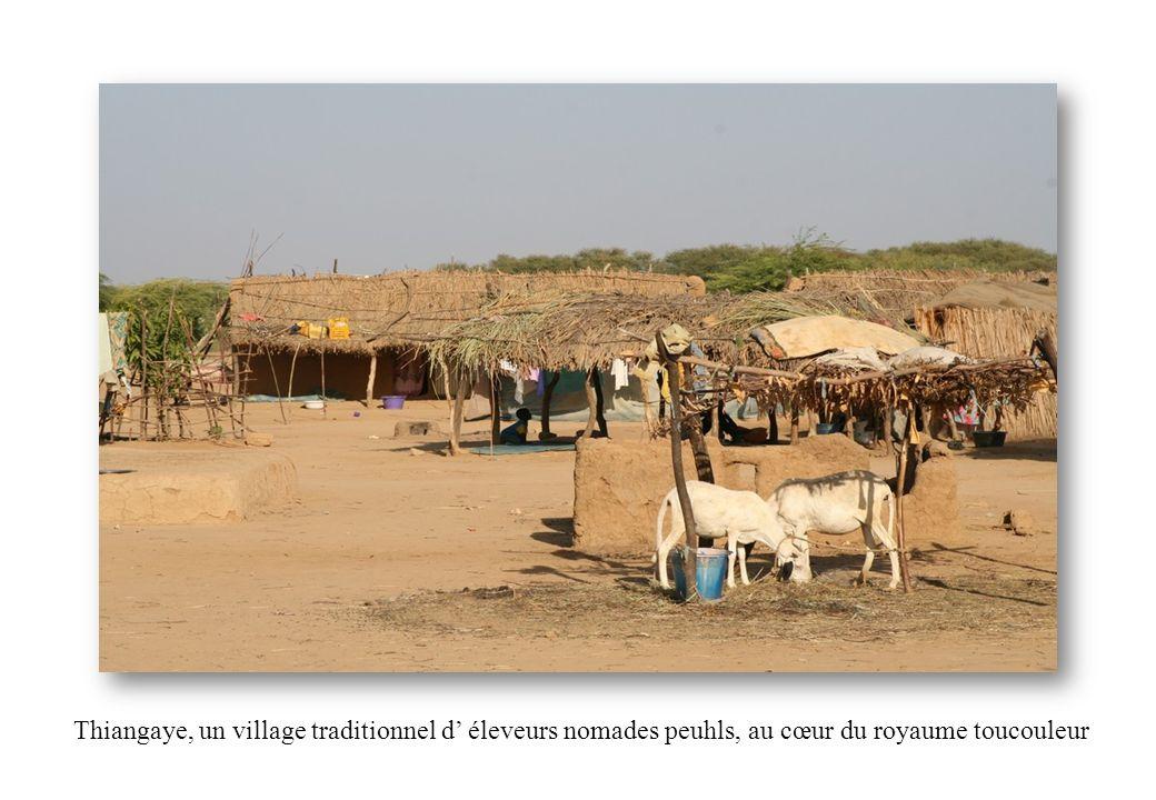 Thiangaye, un village traditionnel d éleveurs nomades peuhls, au cœur du royaume toucouleur