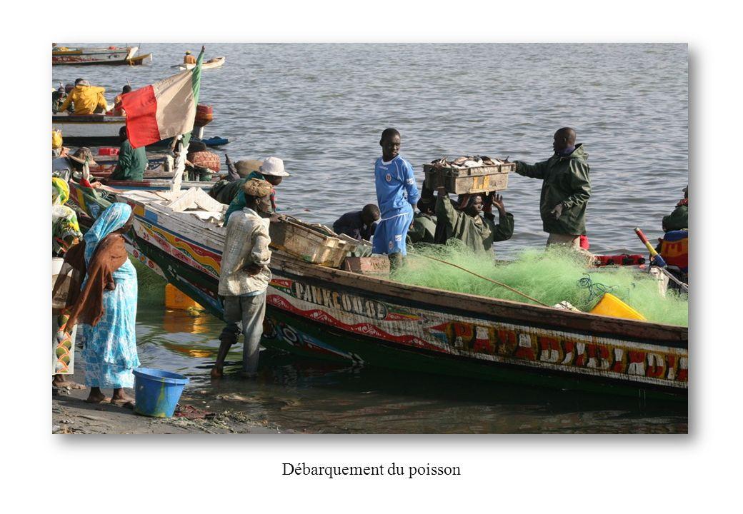 Débarquement du poisson