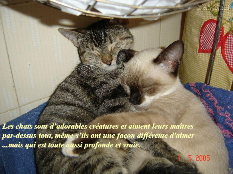 Les chats sont des guérisseurs… À l'époque de l'Atlantide, les guérisseurs utilisaient des cristaux dans leur travail. Les cristaux étaient utilisés c
