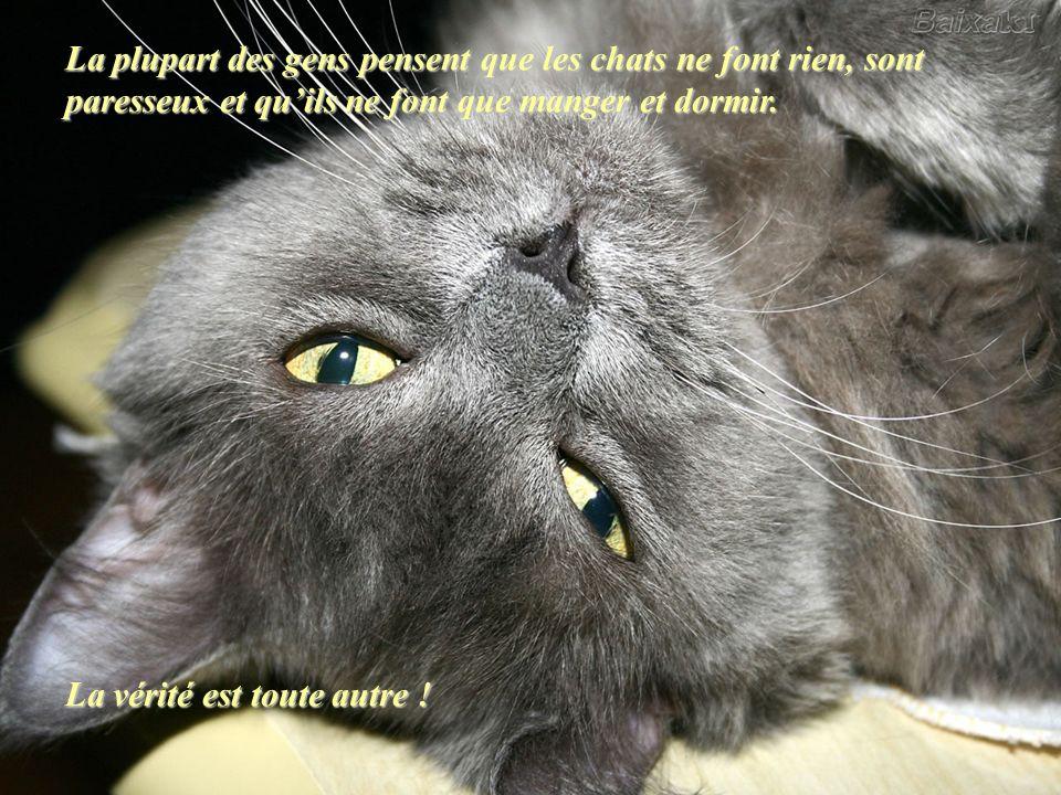 La plupart des gens pensent que les chats ne font rien, sont paresseux et quils ne font que manger et dormir.