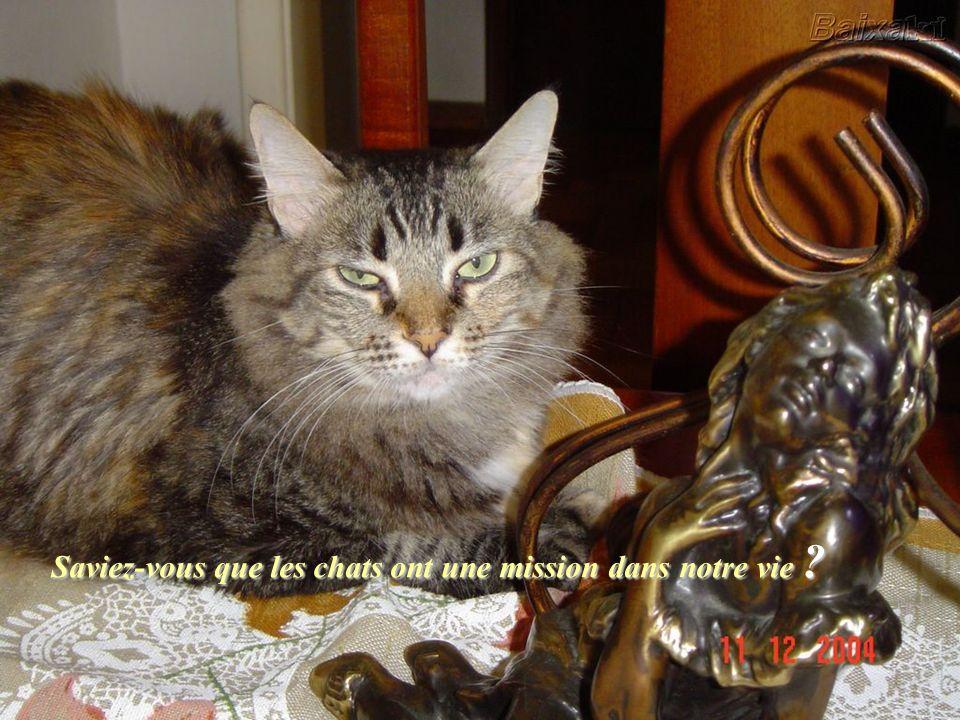 La plupart des gens pensent que les chats ne font rien, sont paresseux et quils ne font que manger et dormir. La vérité est toute autre !