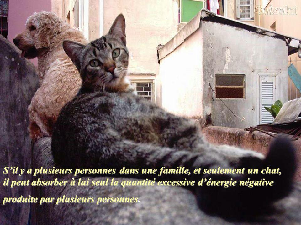 Tous les chats ont le pouvoir de supprimer les énergies négatives accumulées dans notre corps.