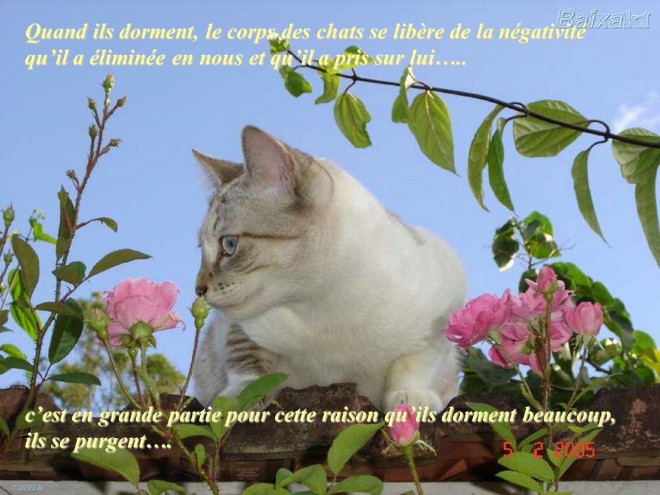 Sil y a plusieurs personnes dans une famille, et seulement un chat, il peut absorber à lui seul la quantité excessive dénergie négative produite par p