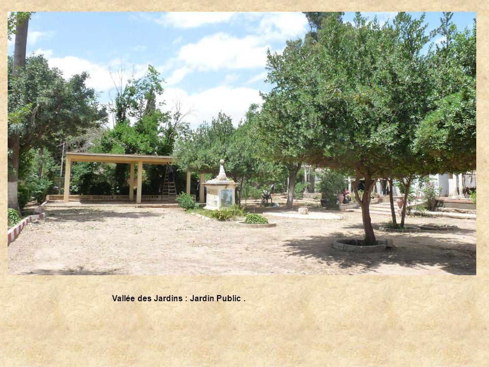 Vallée des Jardins : Jardin Public – Allée centrale.