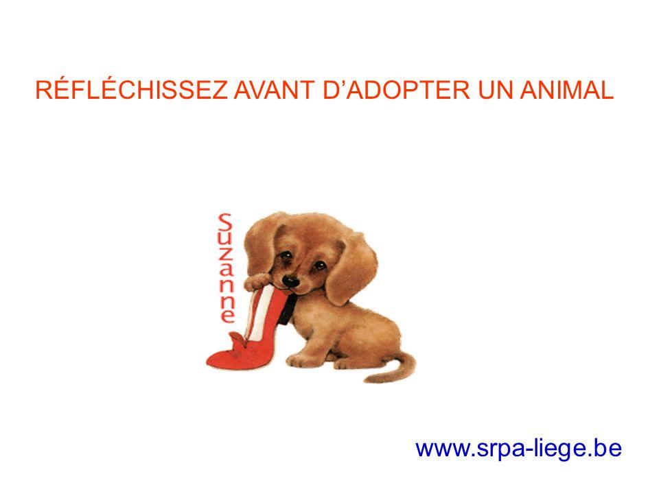 RÉFLÉCHISSEZ AVANT DADOPTER UN ANIMAL www.srpa-liege.be