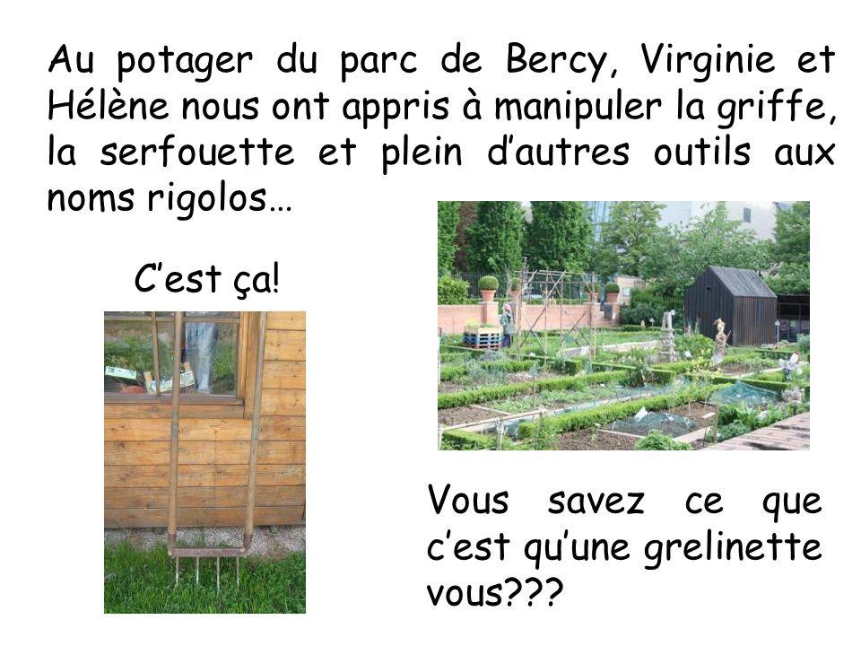 Au potager du parc de Bercy, Virginie et Hélène nous ont appris à manipuler la griffe, la serfouette et plein dautres outils aux noms rigolos… Vous sa