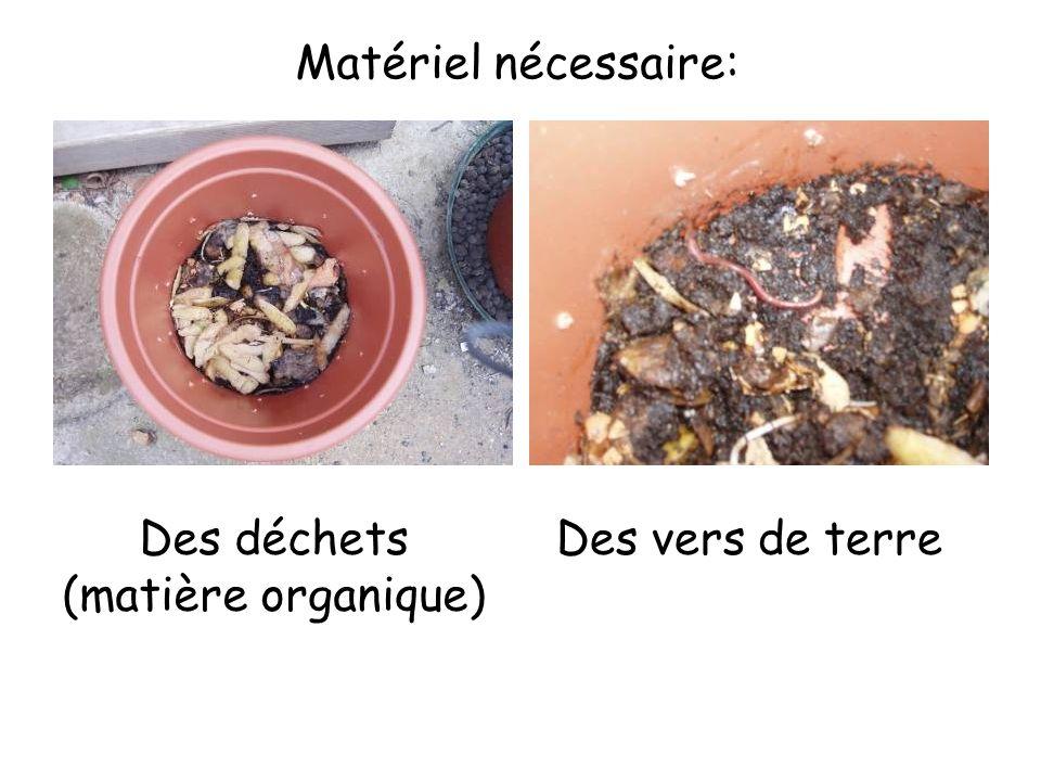 Matériel nécessaire: Des déchets (matière organique) Des vers de terre