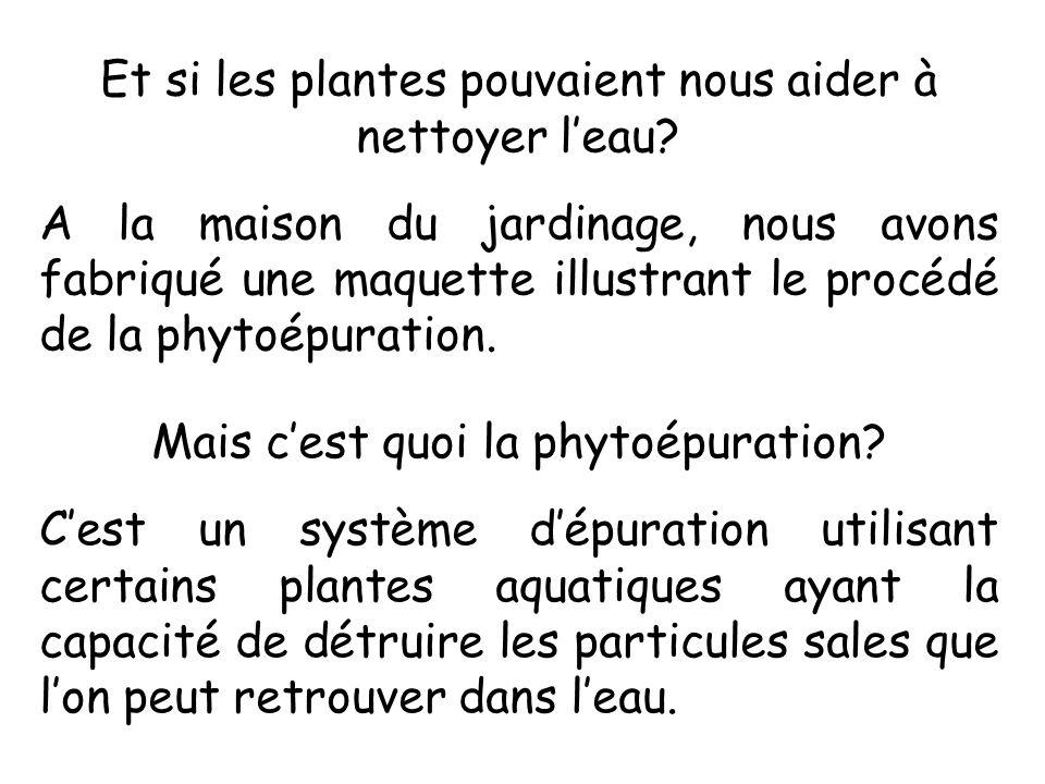 Et si les plantes pouvaient nous aider à nettoyer leau? A la maison du jardinage, nous avons fabriqué une maquette illustrant le procédé de la phytoép