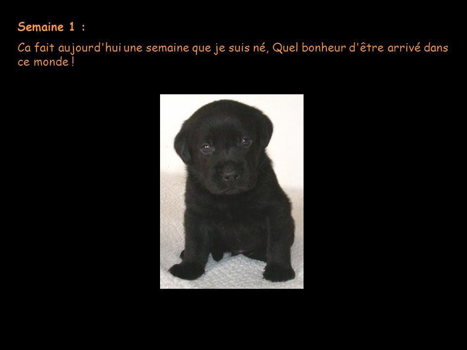 Journal d un chien Histoire triste mais tellement vraie !