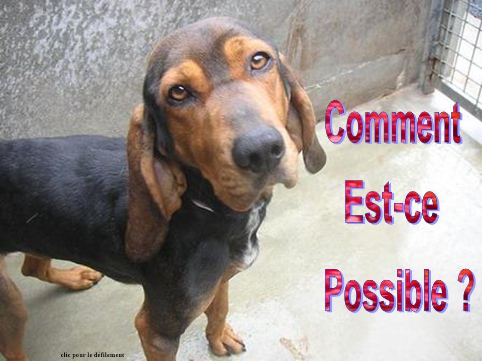S il vous plaît utilisez - le pour aider à l éducation, sur vos websites, dans des bulletins d informations, dans les refuges pour animaux et tableaux d affichage du bureau du vétérinaire.