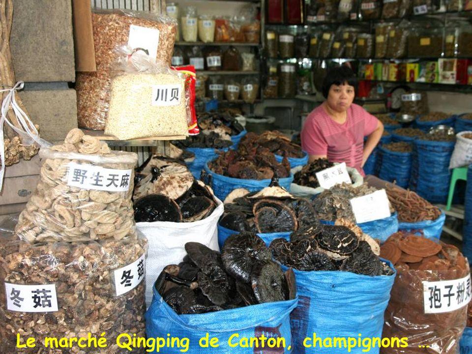 Marché de Canton Le marché Qingping de Canton, champignons …