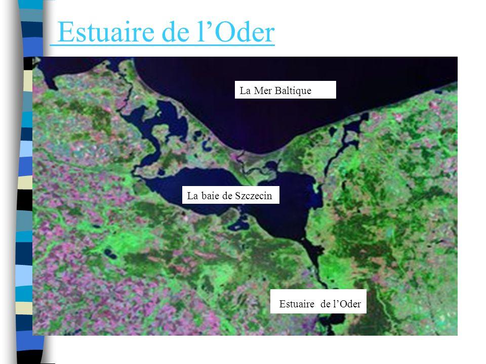 Le port de Swinoujscie LOder se jette dans la Mer Baltique. Un port de commerce est installé à Swinoujscie, sur la Mer Baltique. Cest aussi un port de